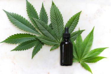 大麻は体に悪いのか?今、大麻が注目されているワケ