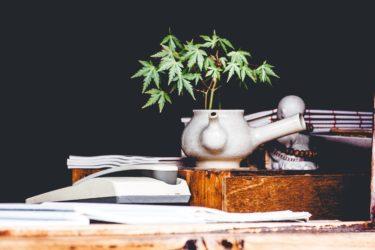大麻(嗜好用/医療用)が合法な国まとめ