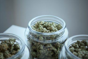 医療大麻/大麻の違いと医療大麻が合法の国