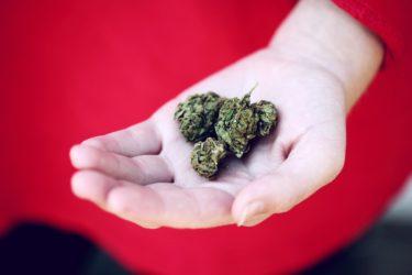 医療大麻は日本で解禁される?合法化するメリット/デメリット